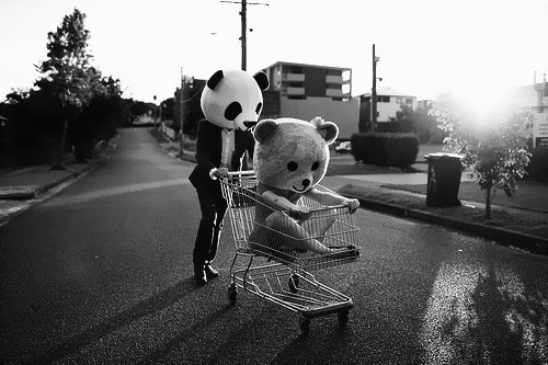 panda in a trolley
